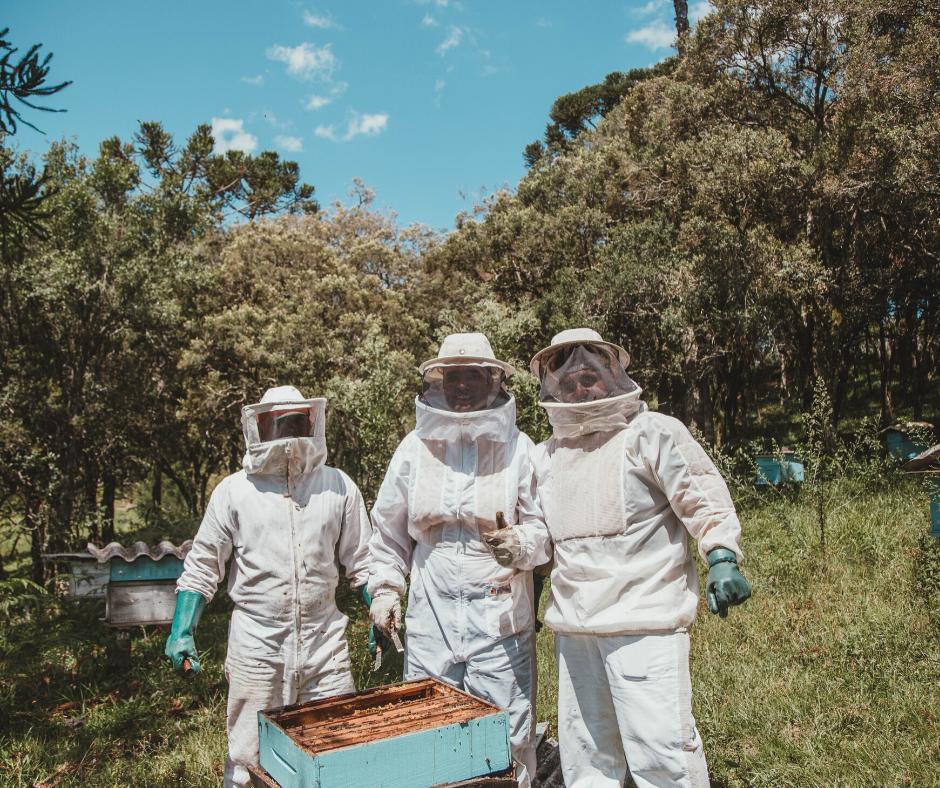 club des apiculteurs