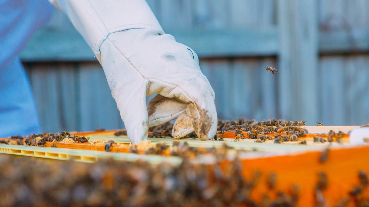 registre elevage apicole gratuit
