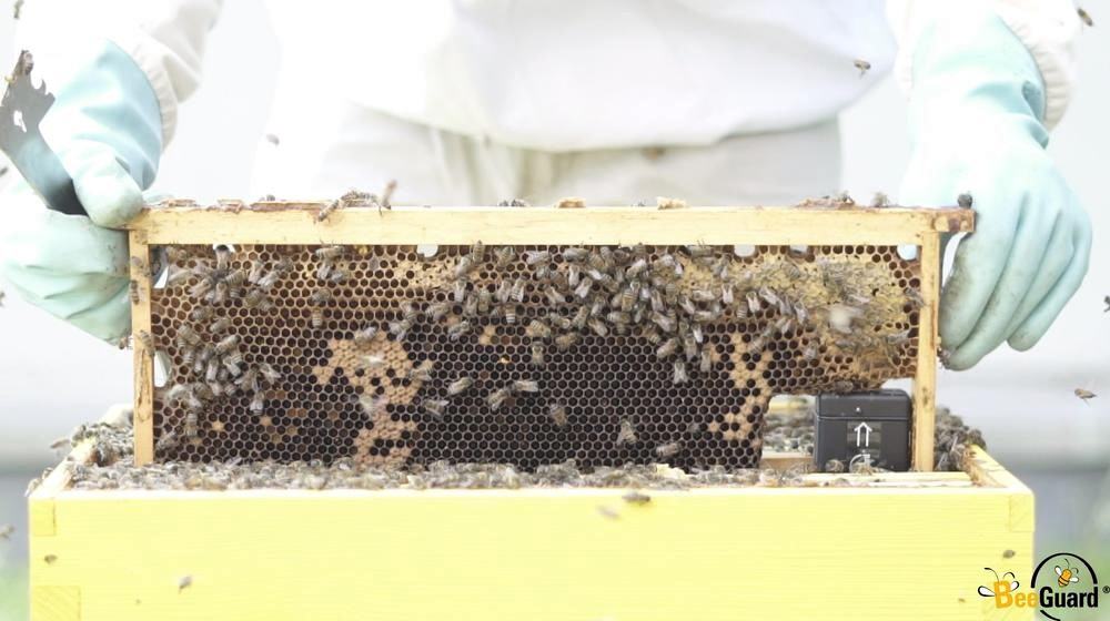 anti vol ruches connectées