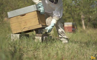 Les ruches connectées BeeGuard au service des apiculteurs