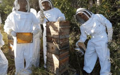 Vêtement d'apiculteur 100% français ? Découvrez la marque Apiprotec