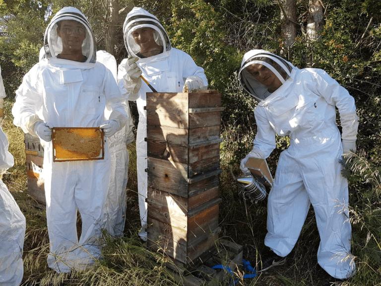 apiculteur sarrasin