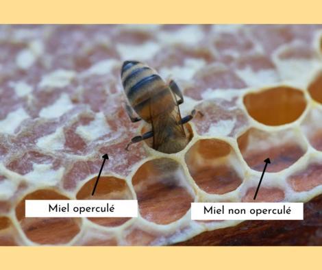 miel opercule explication