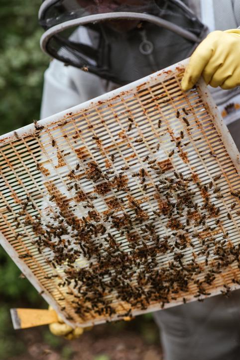 ruche avec grille a propolis